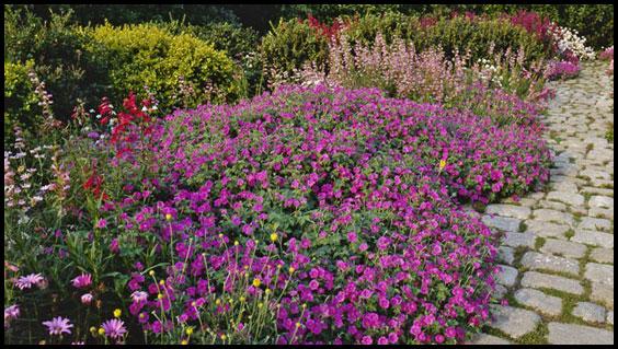 Les fleurs le garrit - Massif de fleurs vivaces ...